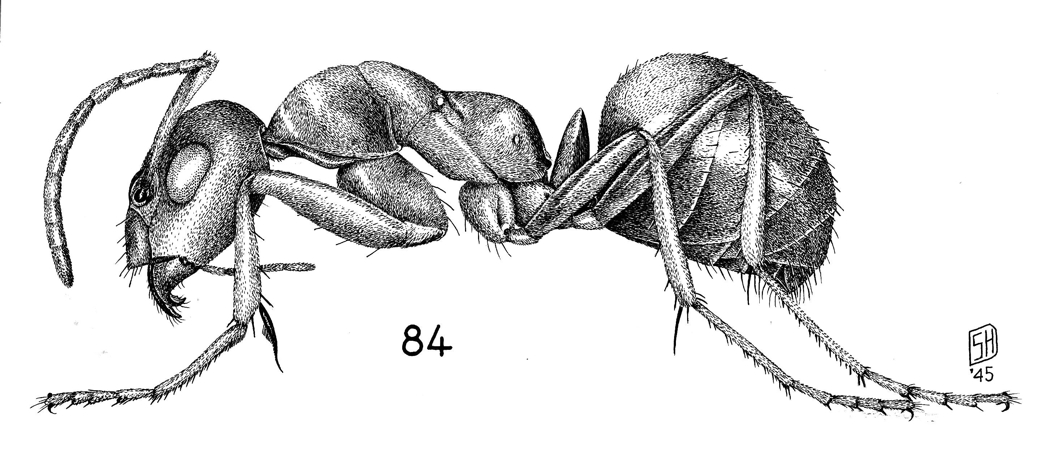 Image result for ant illustration